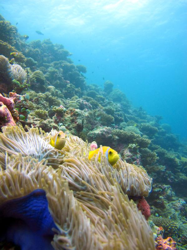 Croisière plongée mer rouge